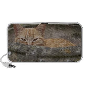 Cat sitting inside urn portable speakers