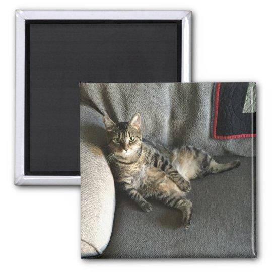 Cat Sitting Magnet