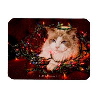 Cat sitting on a ball of Christmas lights. Rectangular Photo Magnet