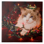 Cat sitting on a ball of Christmas lights. Ceramic Tile