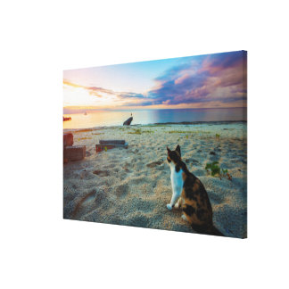 Cat Sitting On A Beach Canvas Print