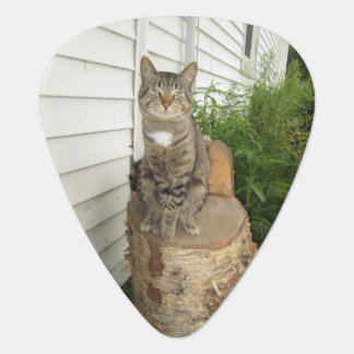 Cat Sitting On Stump Guitar Pick
