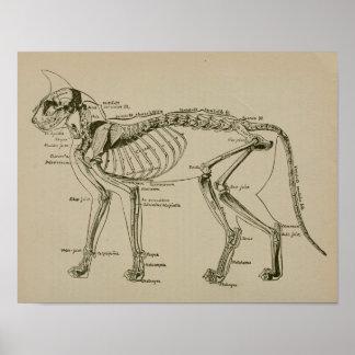 Cat Skeleton Anatomy Vintage Veterinary Print
