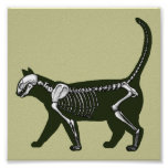 cat skeleton posters