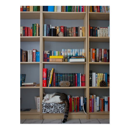 Cat sleeping in bookshelf library books postcard