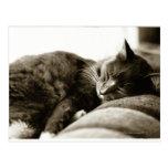 Cat sleeping on sofa (B&W sepia tone) Postcard