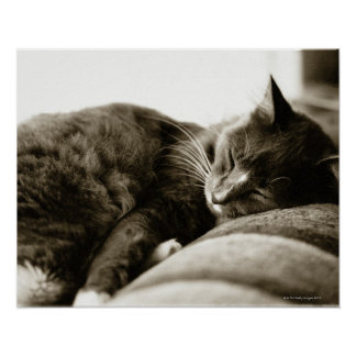 Cat sleeping on sofa (B&W sepia tone) Poster