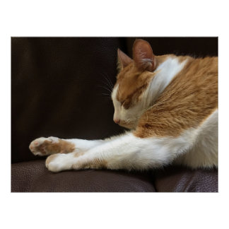 Cat sleeping on sofa poster