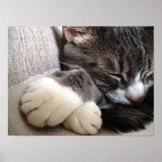 Cat sleeping poster