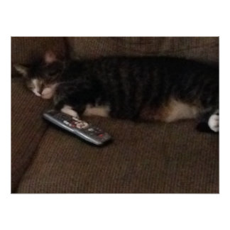 Cat Sleeping with the Remote Poster