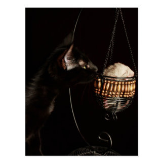 Cat Smells Baby Chinchilla Postcard