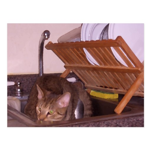 Cat Sous-Chef Hiding in the Sink CricketDiane Postcards