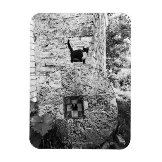 Cat standing on old stone wheel rectangle magnets