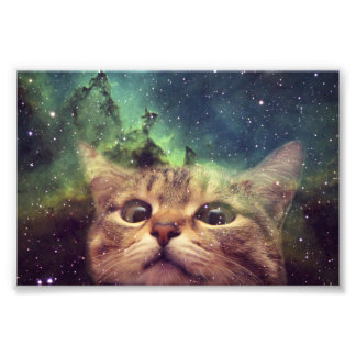 Cat Staring into Space Photo Print