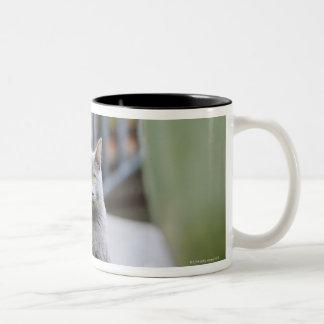 Cat staring Two-Tone coffee mug