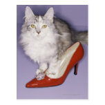Cat stepping into high heel