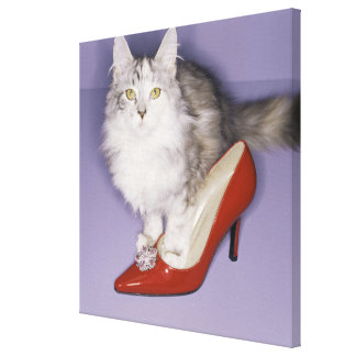 Cat stepping into high heel canvas print