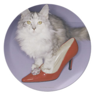 Cat stepping into high heel plate