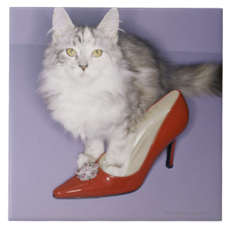 Cat stepping into high heel tile