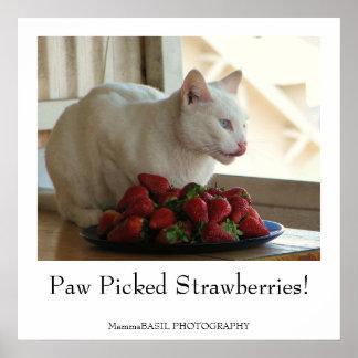 Cat Strawberries Poster