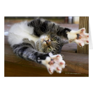 Cat stretching, indoors card