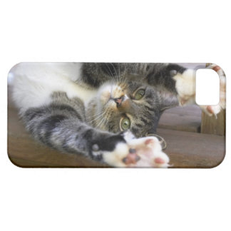 Cat stretching, indoors iPhone 5 covers