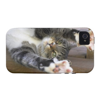 Cat stretching, indoors vibe iPhone 4 cases