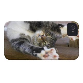 Cat stretching, indoors iPhone 4 Case-Mate cases