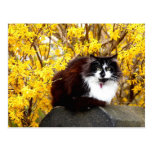 Cat surrounded by yellow forsythia blooms post cards