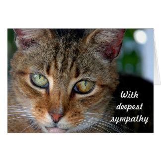 Cat sympathy 2 card