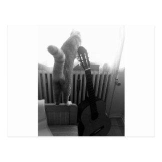 Cat Tail. Black/White Postcard