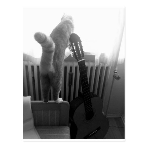 Cat Tail. Black/White Post Cards