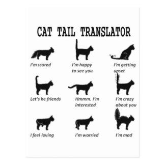 CAT TAIL TRANSLATOR POSTCARD