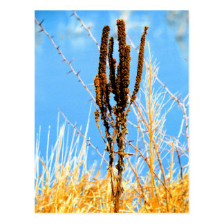 Cat tails and more post card