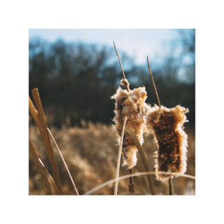Cat Tails in Winter Canvas Print