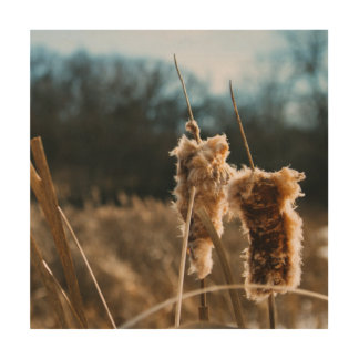 Cat Tails in Winter Wood Wall Art