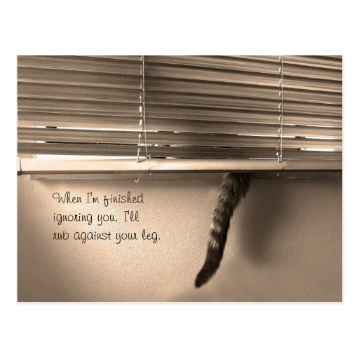 Cat Tails Postcard