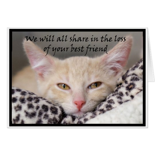 Cat theme bereavement card for loss of a pet