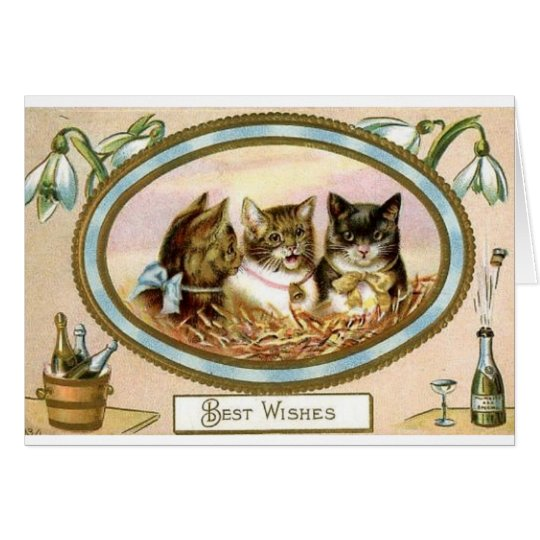 Cat Trio Congratulations - Special Occasion Card