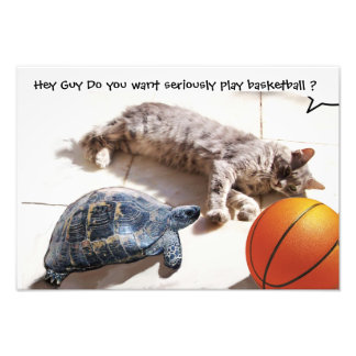 CAT ,TURTLE  AND BASKETBALL PHOTOGRAPH