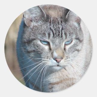 Cat Walk Classic Round Sticker