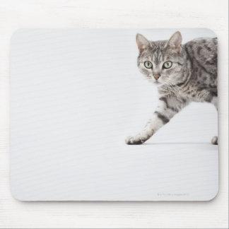 Cat walking mousepads