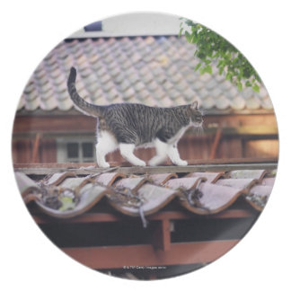 Cat walking on roof of shed plate