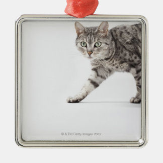 Cat walking Silver-Colored square decoration