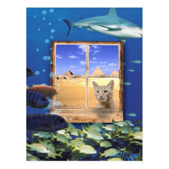 Cat Watching Fish Under the Sea Postcard