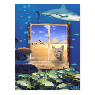 Cat Watching Fish Under the Sea Postcards