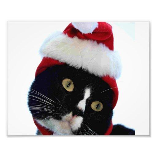 Cat wearing santa hat photograph, BW kitty