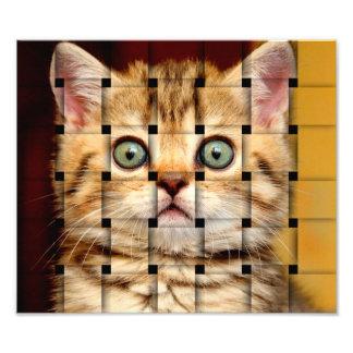 Cat Weave Photo Art