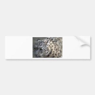 Cat Wild Snow Leopard Spots Destiny Nature Bumper Sticker