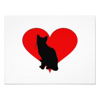 Cat with a big heart photo art